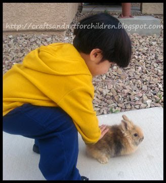 Wordless Wednesdays ~ Baby Bunny
